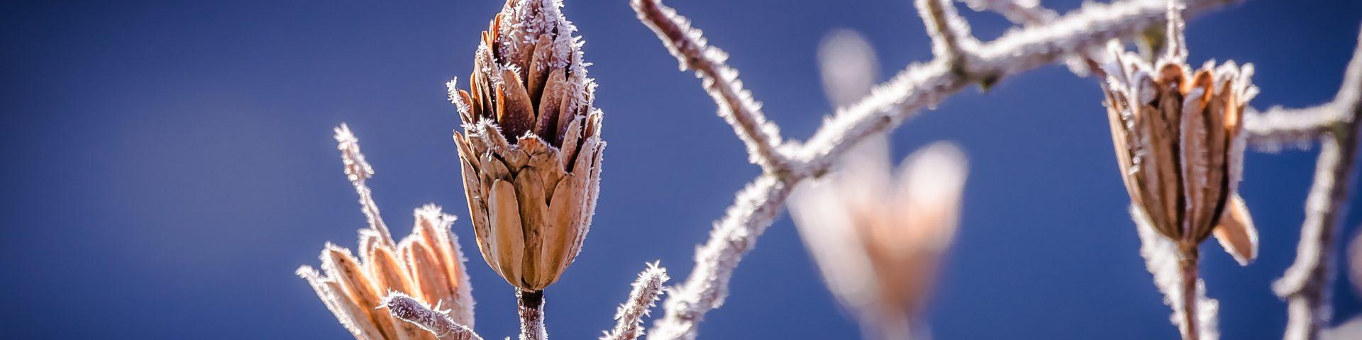 winter, nature, bud